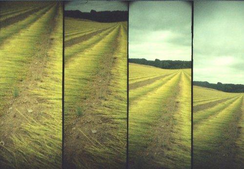 photo lomographie, heu, erreur, champs de lin en Pays de Caux